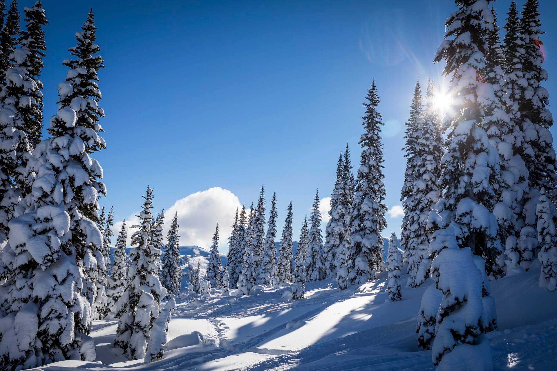 Whistler Back Country